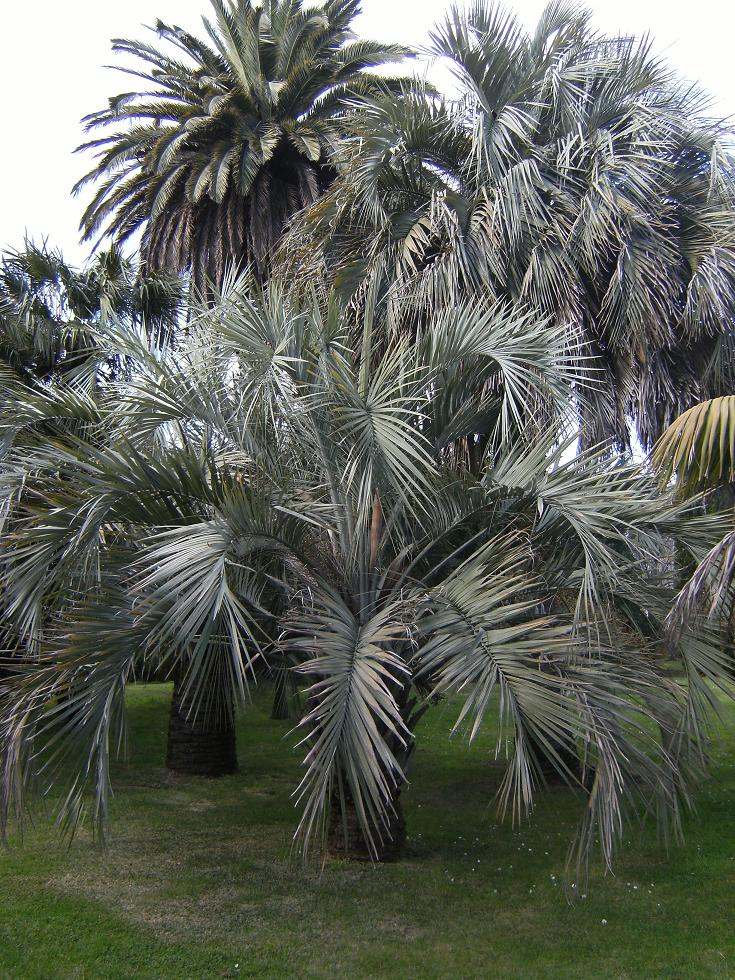 Which Climate Can Support More Palm Trees Hobart